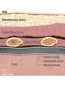 Lung, Rib, Skin, Tissue Diagram