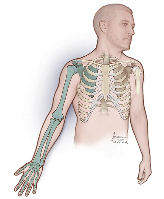 Man Skeletal Illustration with Arm Highlighted in Green for Supraclavicular Block